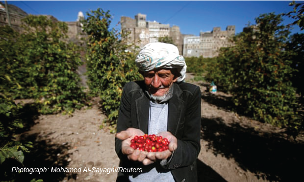 A farmer with a handful of freshly picked coffee cherries in Haraz. Once harvested, they are dried, aged and the beans separated from the husks by hand
